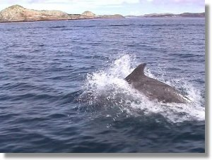 Dolphins can be seen off the coast